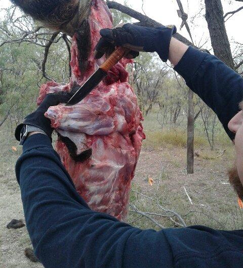 Custom Knives, Lucas Forge, Hog Hunting Knife, Field Dressing Knife