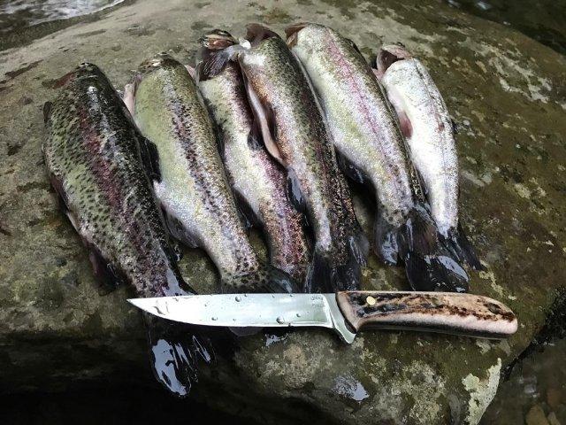 Fish Knife, Custom Fish Knife, Lucas Forge Knife, Hunting Knives